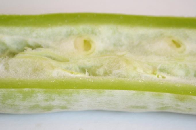 przekrój przez młody owoc gurdliny