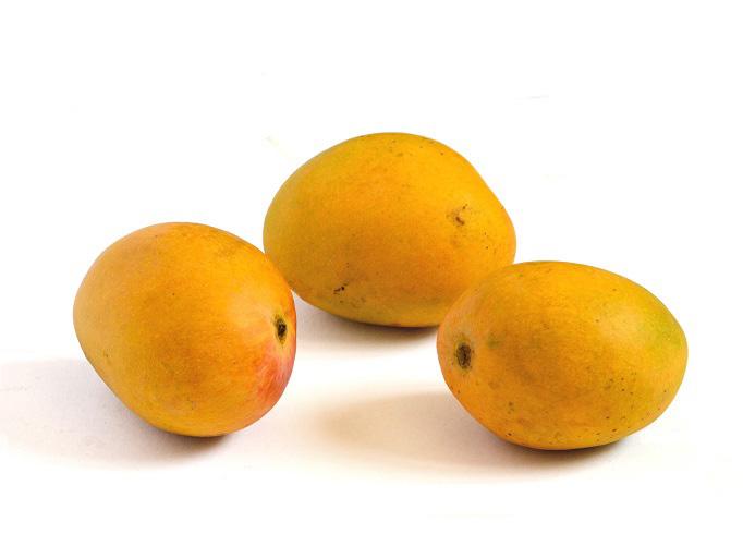 mango alfonso
